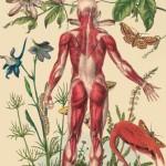 Almodóvar's anatomy