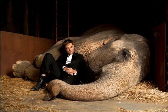 Pattinson: sexy como um elefante.