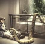 Língua de Cobra
